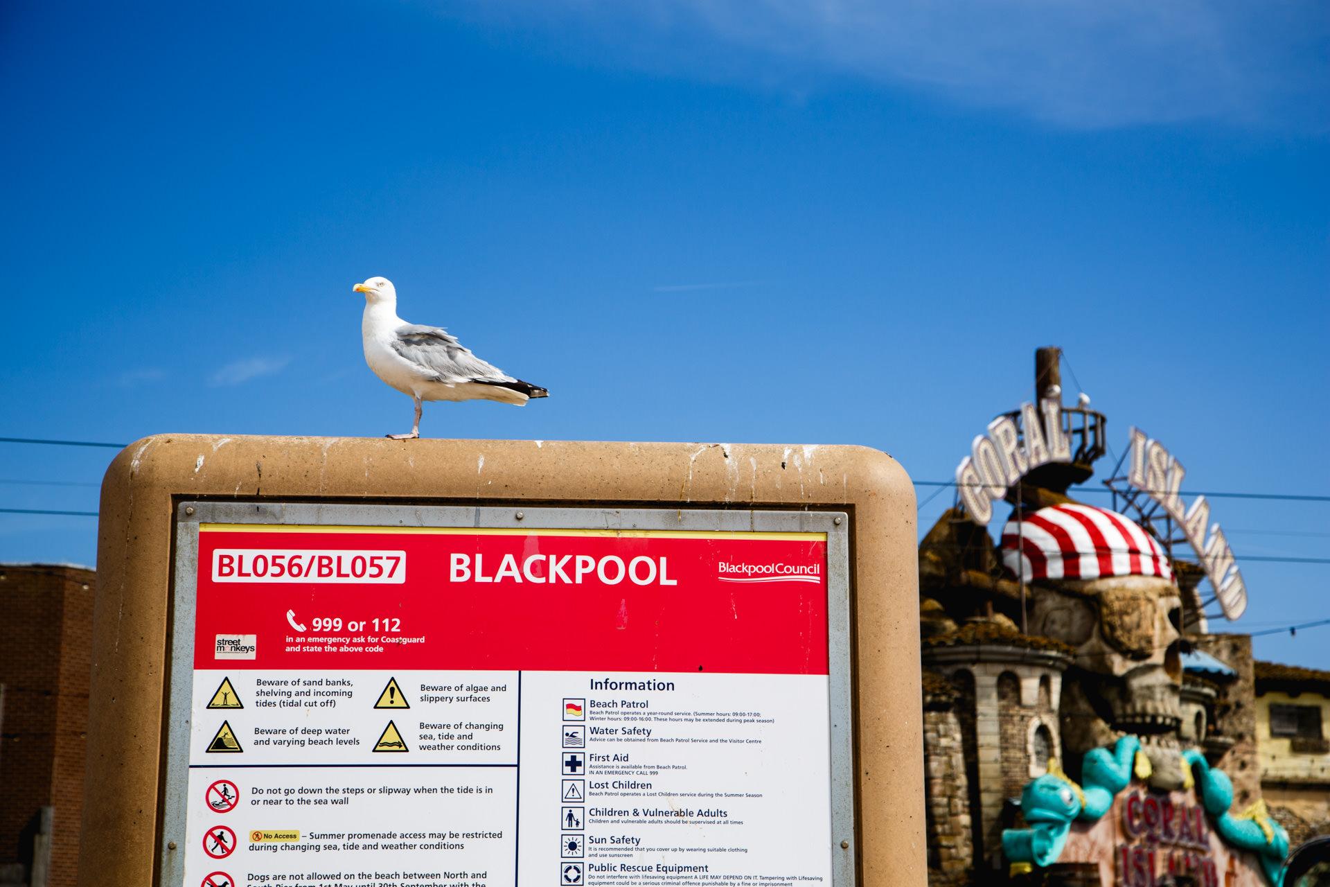 Andrew Wilson Photography Blackpool (21) Seagull.jpg
