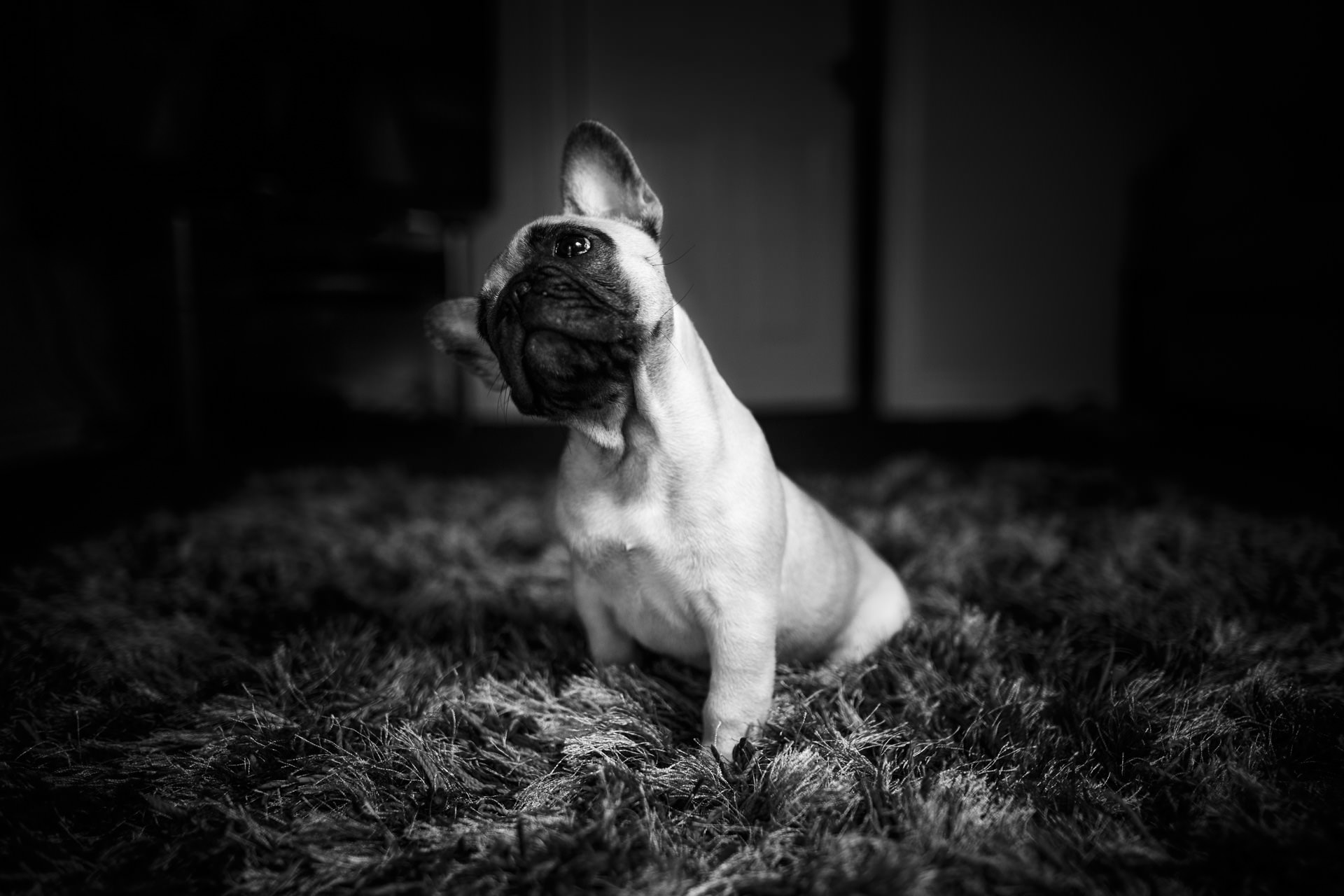The classic head-tilt dog pose.