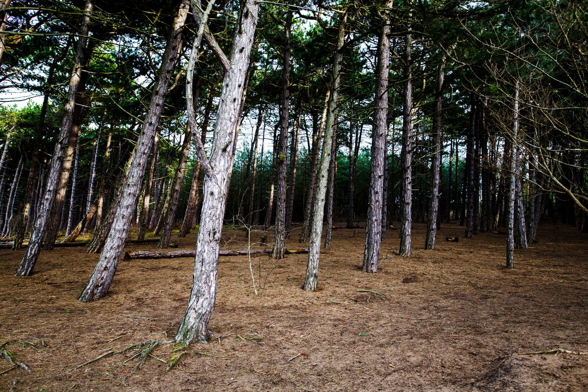 Andrew Wilson Photography Formby Beach Liverpool Tree