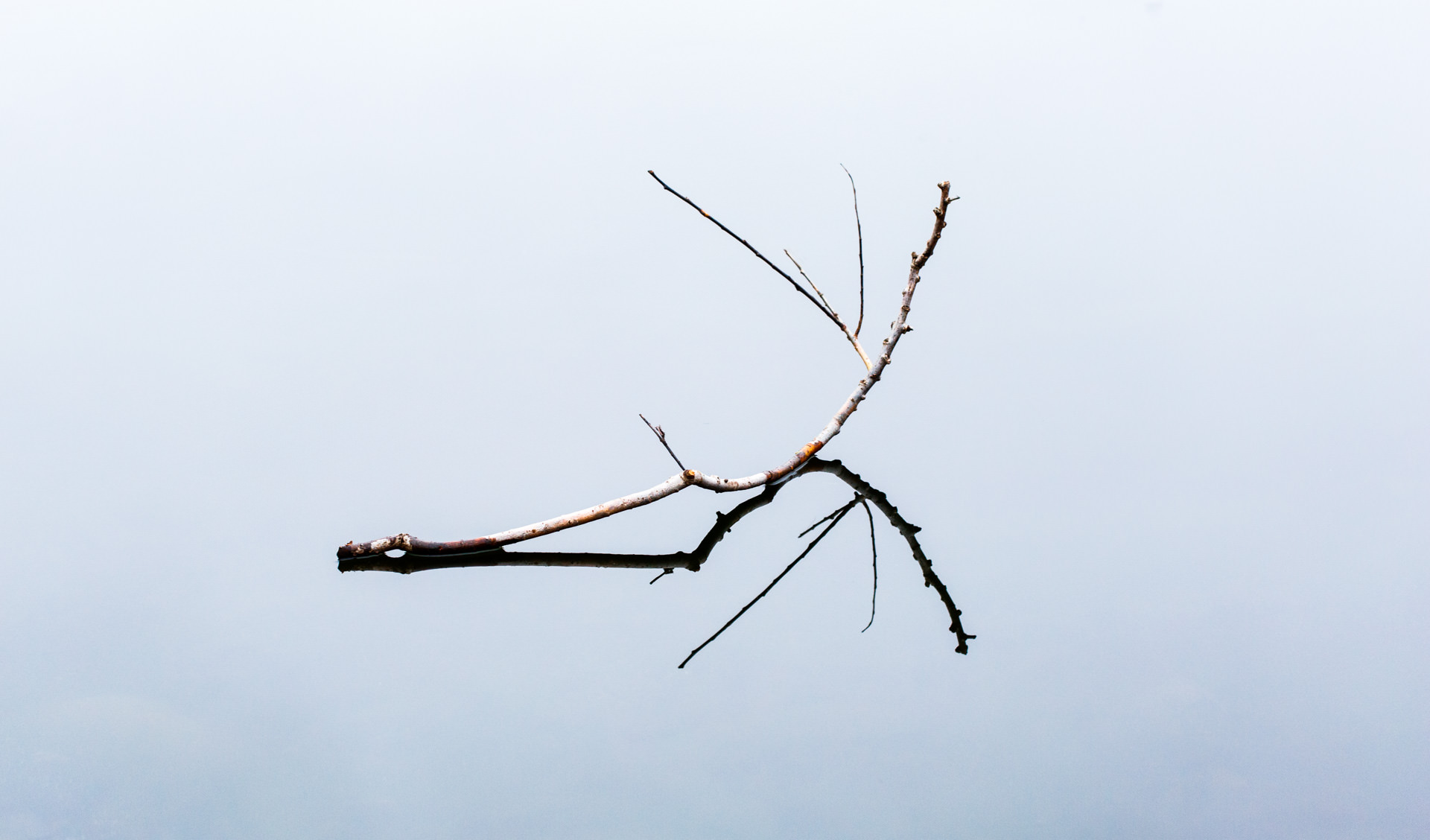 I had already eyed up a branch sitting on top of the lake's frozen surface, but it was out of reach for the me.Inspired, I threw this branch onto the surface.It took a few throws to get one in place - all the others slid further than I expected!