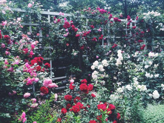 FloraFolk Wedding Florist Sydney New York Garden 3