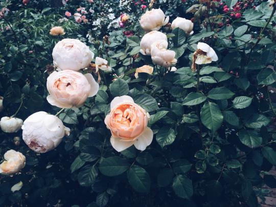 FloraFolk Wedding Florist Sydney New York Garden 5