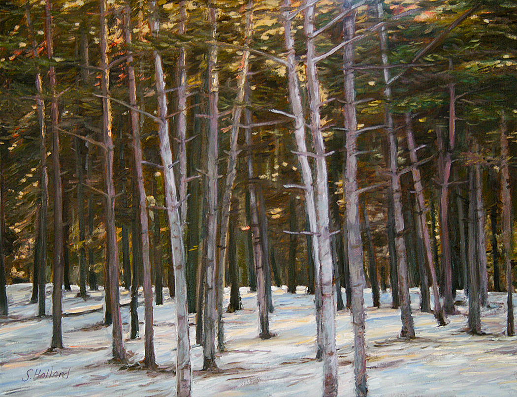 Pine Copse by Sharon Holland