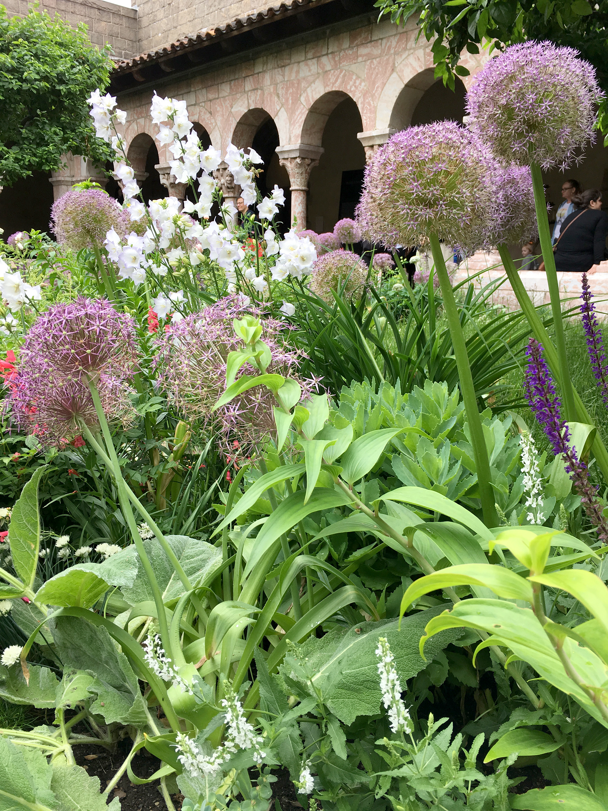 The Judy Black Garden in the Cuxa Cloister