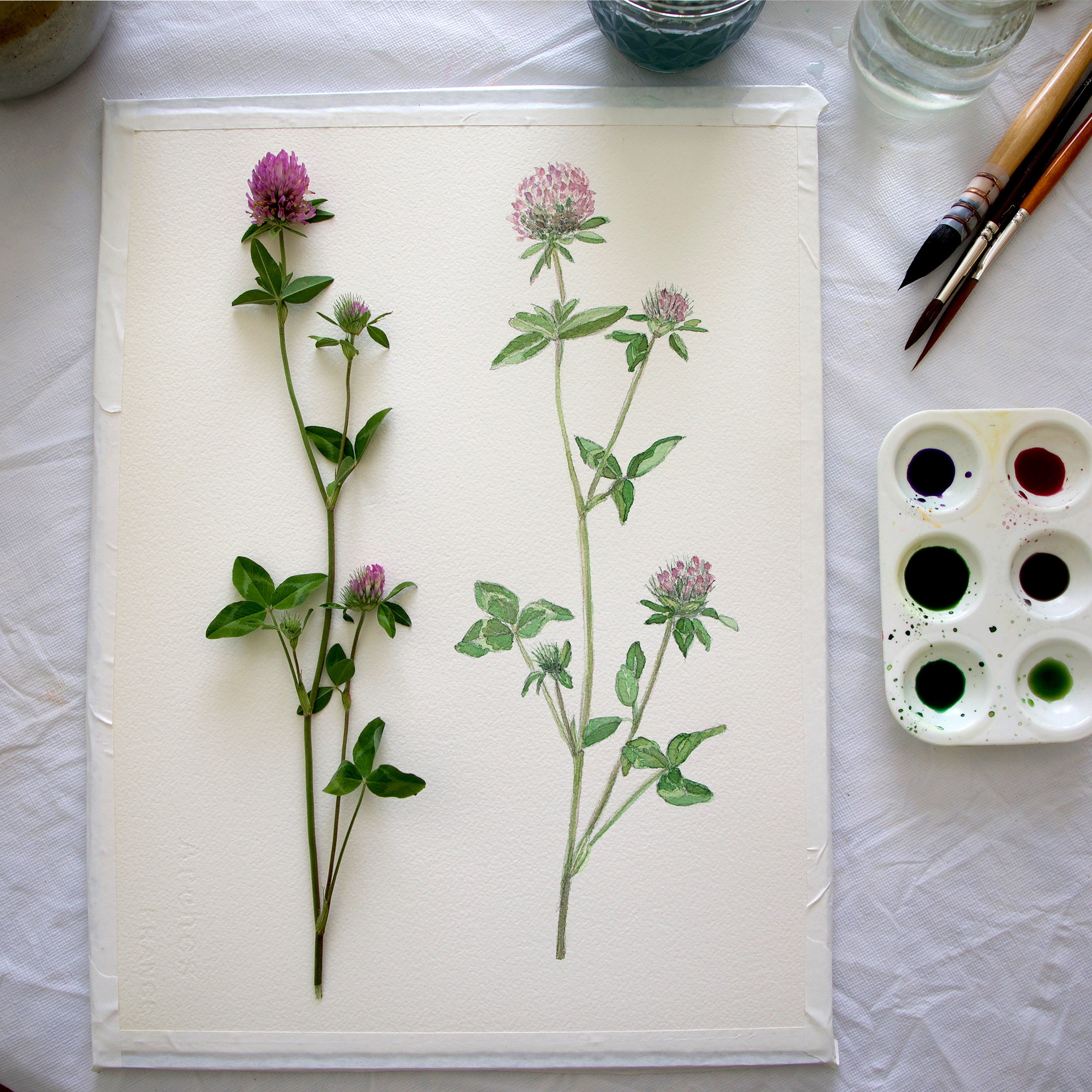 Clover Study by Sharon Holland
