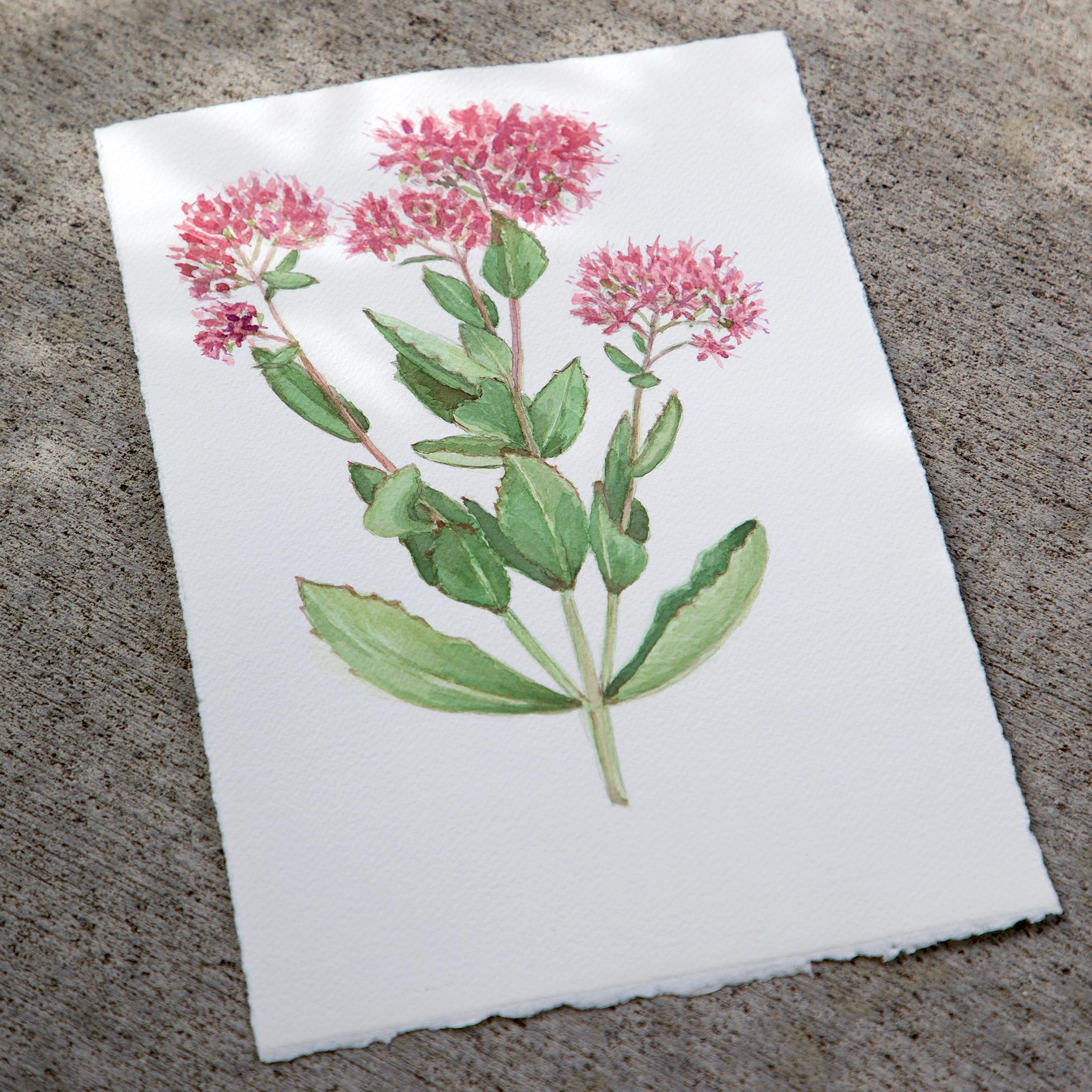 Autumn Joy watercolor by Sharon Holland