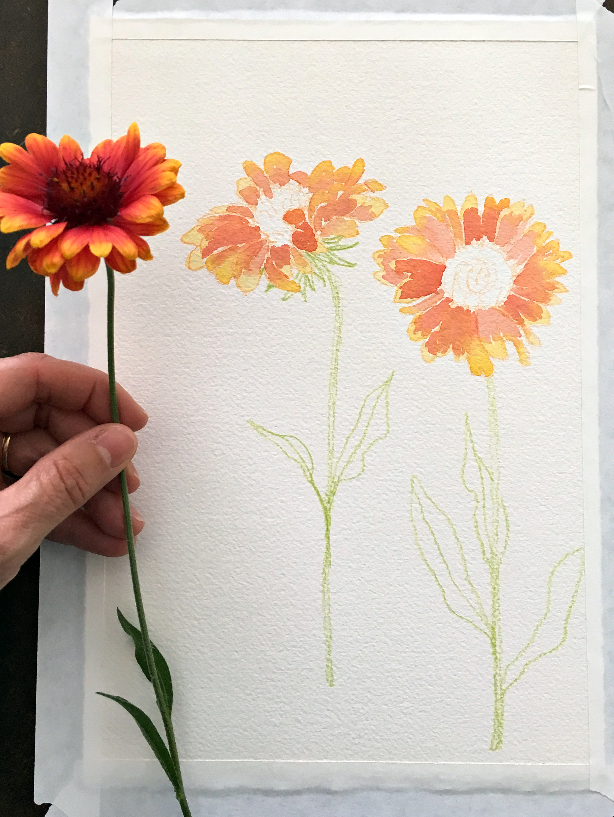 Blanket Flower Process by Sharon Holland