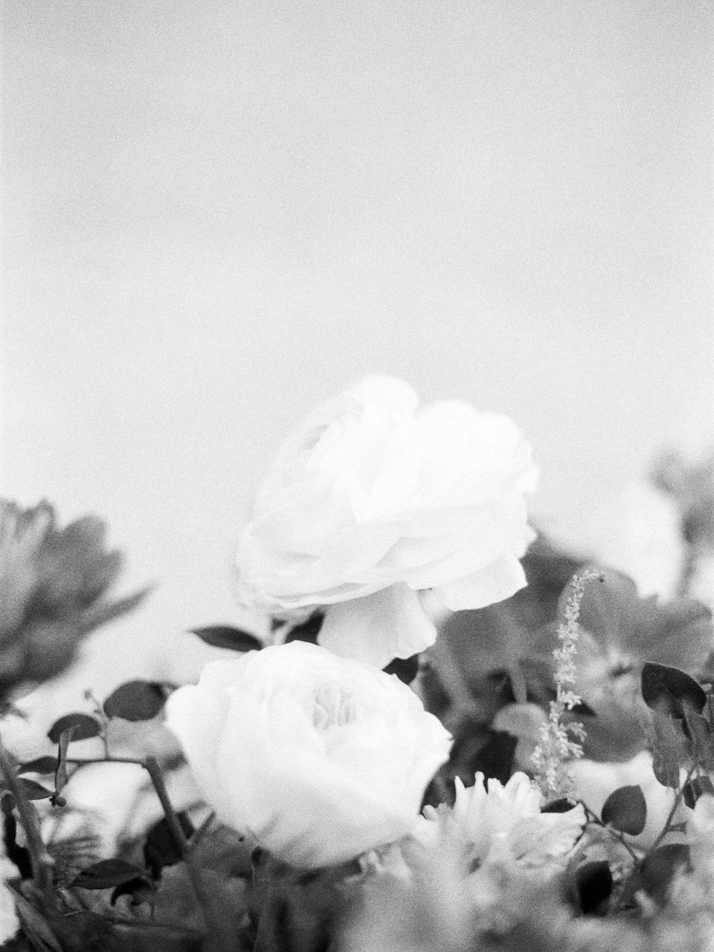 Christine Gosch - destination film photographer - houston wedding photographer - fine art film photographer - elopement photographer - destination wedding - understated wedding - simple beautiful wedding photography-23.jpg