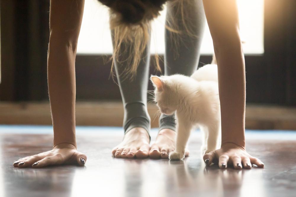 kitten and yoga forward bend.jpg