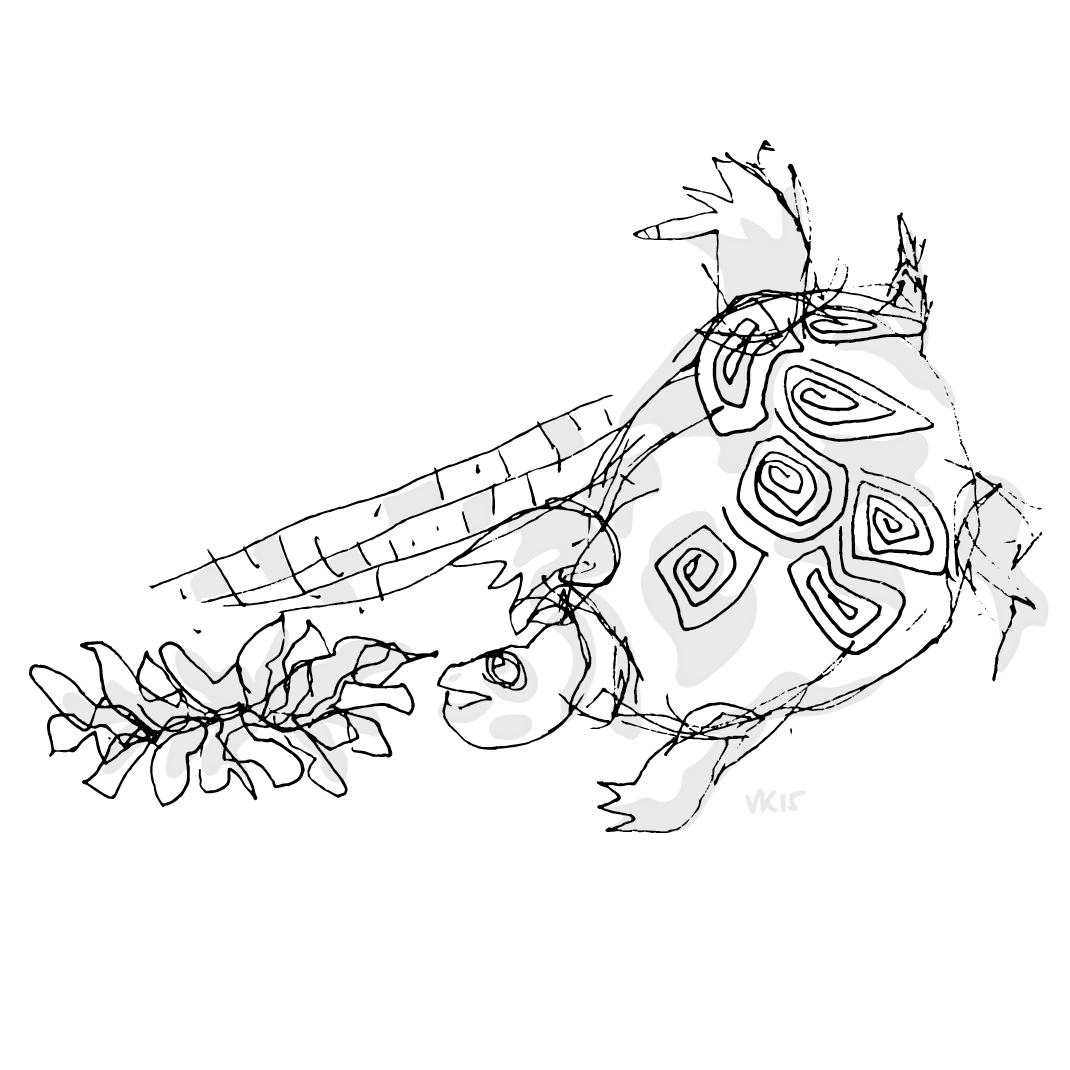 6.14.15_turtle_turtle.png