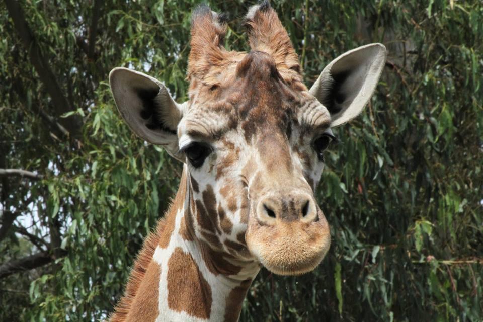 Rosie, a ten-year-year-old giraffe, died unexpectedly in 2018.