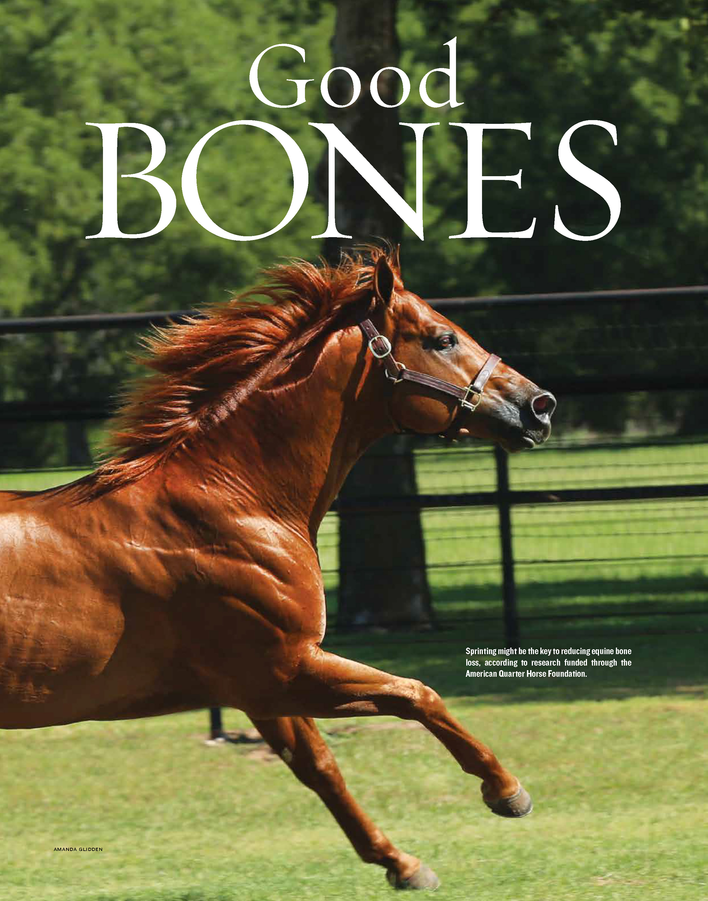 G13 AQHA Research - bone loss_Page_1.jpg