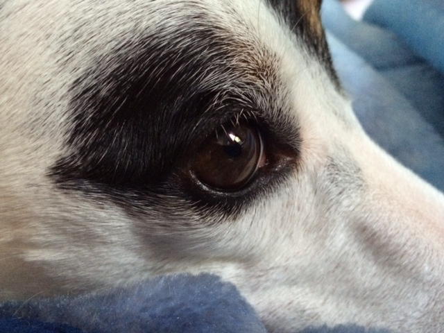 Up Close with Riley.JPG