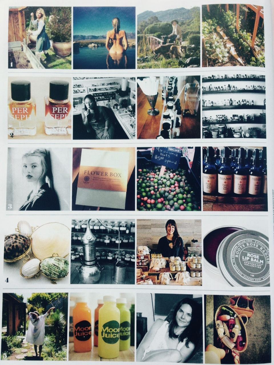 Vogue & Roots Rose Radish