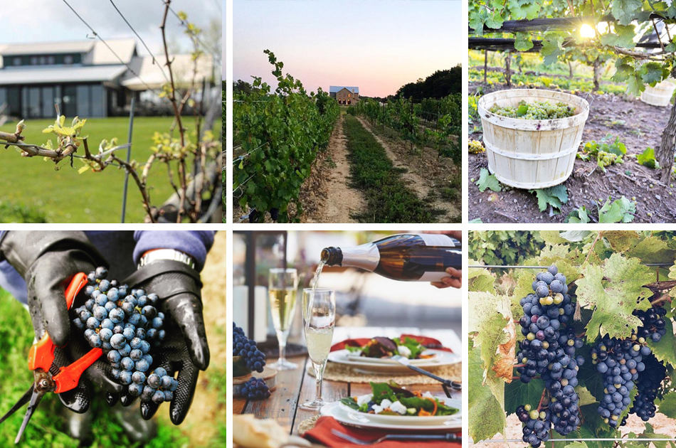 Photo Credit: Wine Country Ontario + Culinary Tourism Alliance