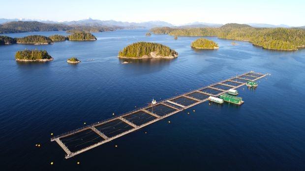 Salmon fish farm off the coast Broughton Archipelago near Vancouver Island (Mychayki Prystupa)