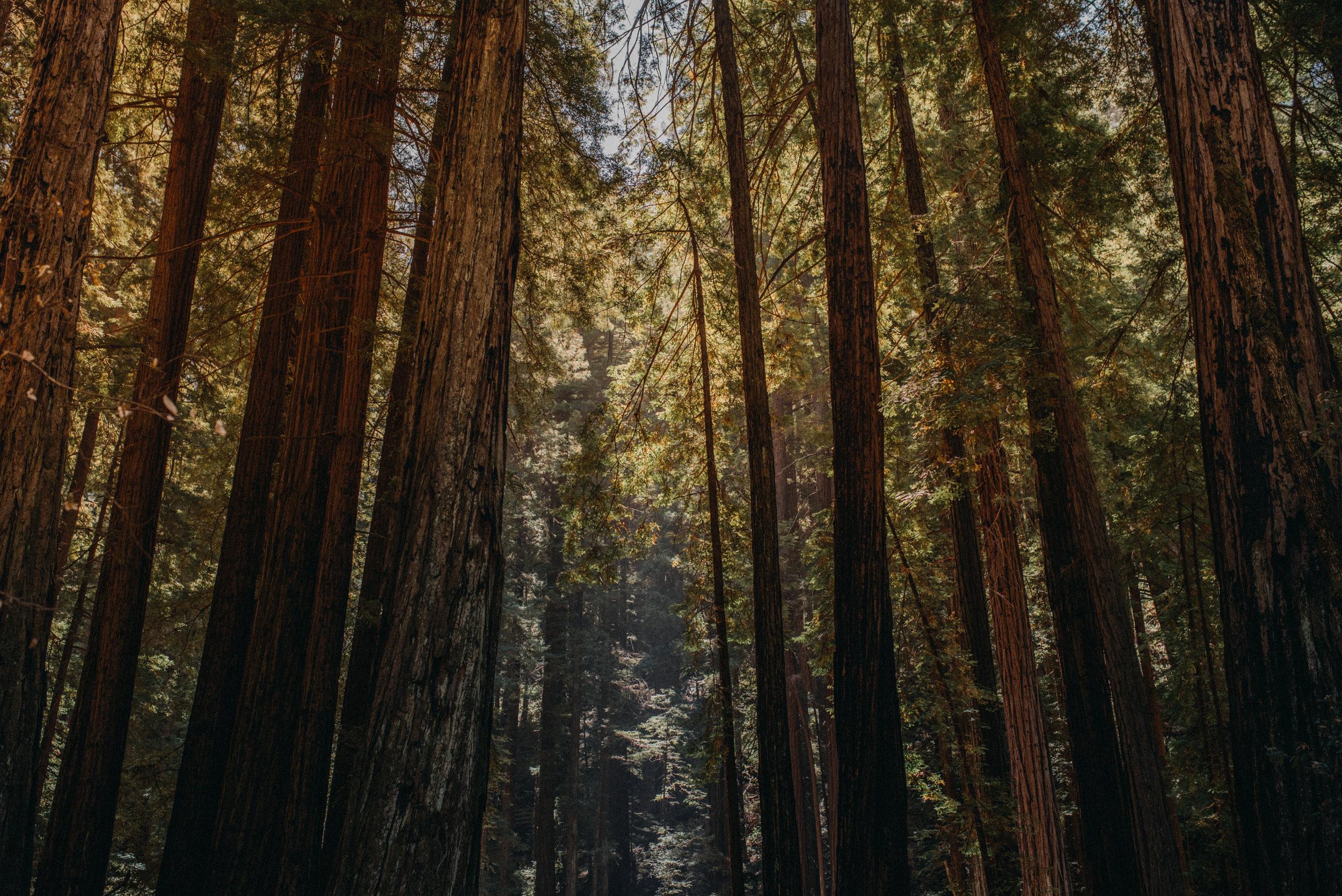 californiavacation-39.jpg