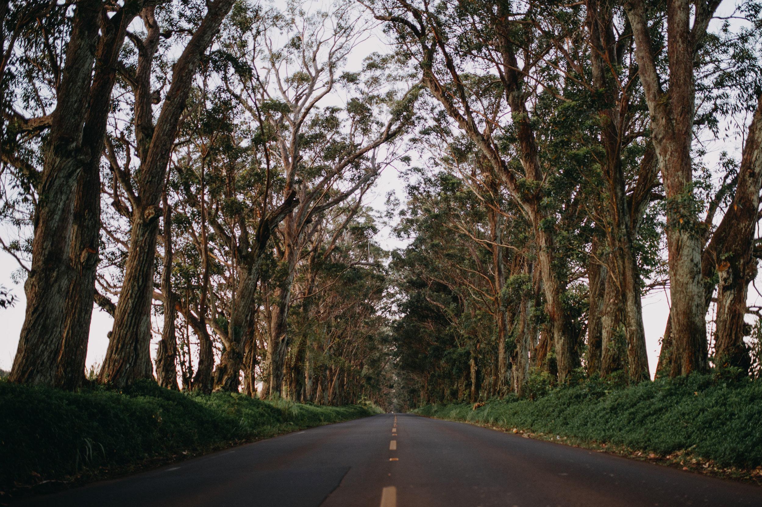 kauai19-53.jpg