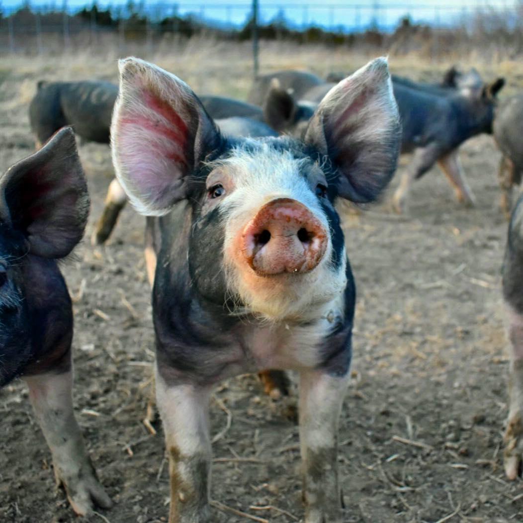 pork1.jpg