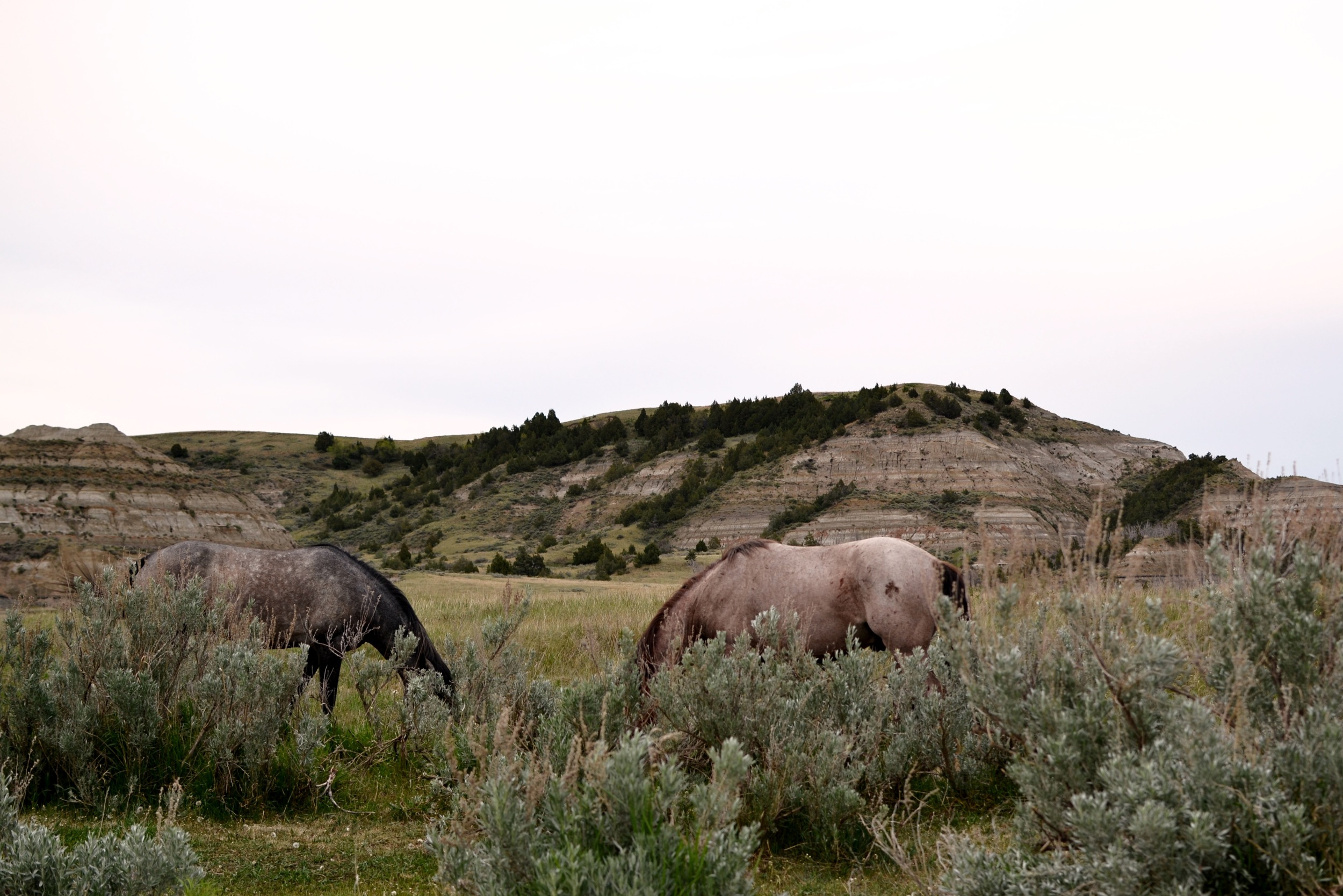 Road Trip: Theodore Roosevelt National Park