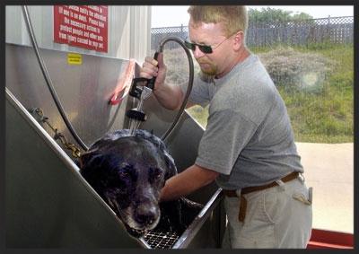 071107.dog-car.wash.jpg