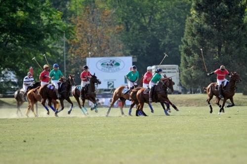 grassfield1.jpg