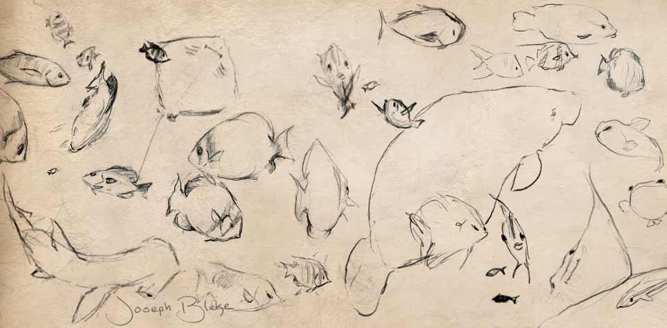 Joseph Blake's sketches of fish