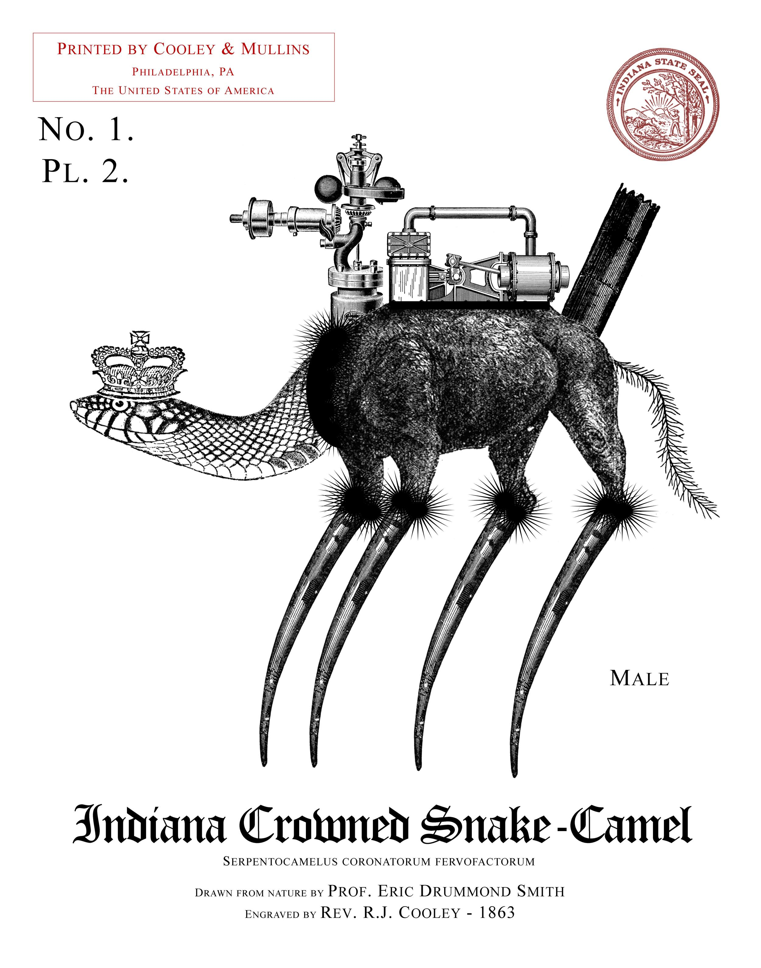 Indiana Crowned Snake-Camel