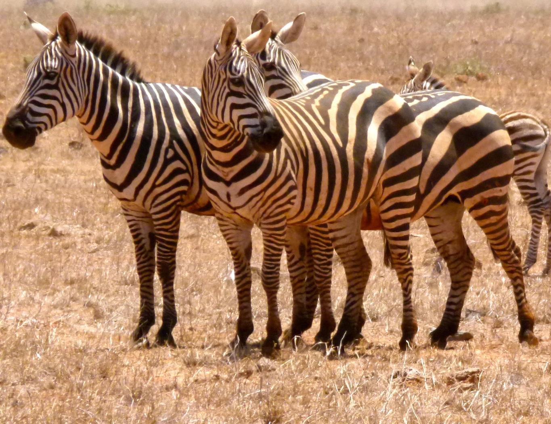 3 Safaris.jpg