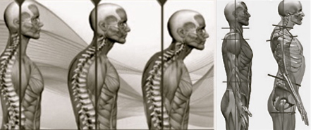 """For every inch of forward head posture, it can increase the weight of the head on the spine by an additional 10 pounds."" (Kapandji,  Physiology of the Joints, Volume 3 )"