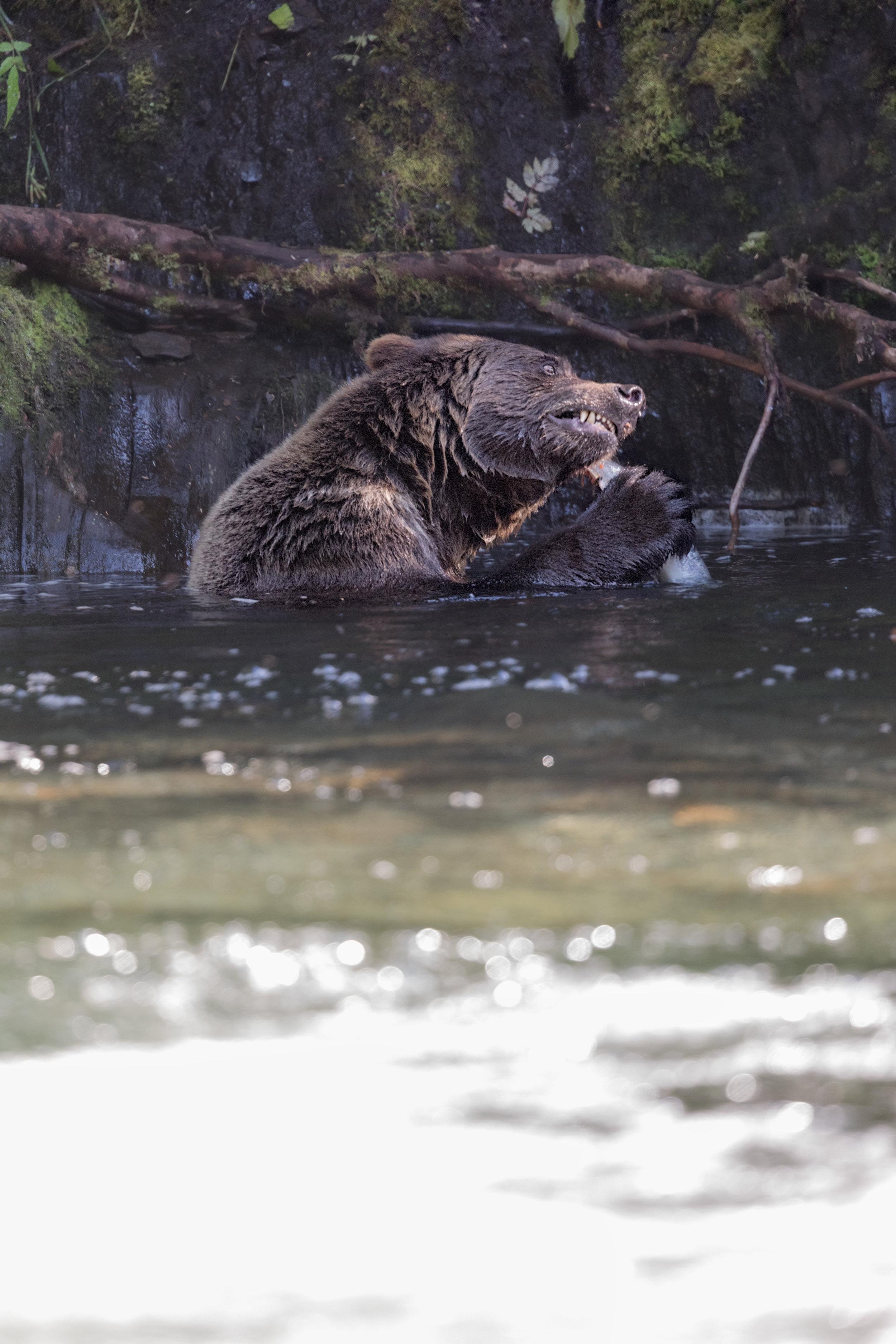 Brown-Bear-2062.jpg