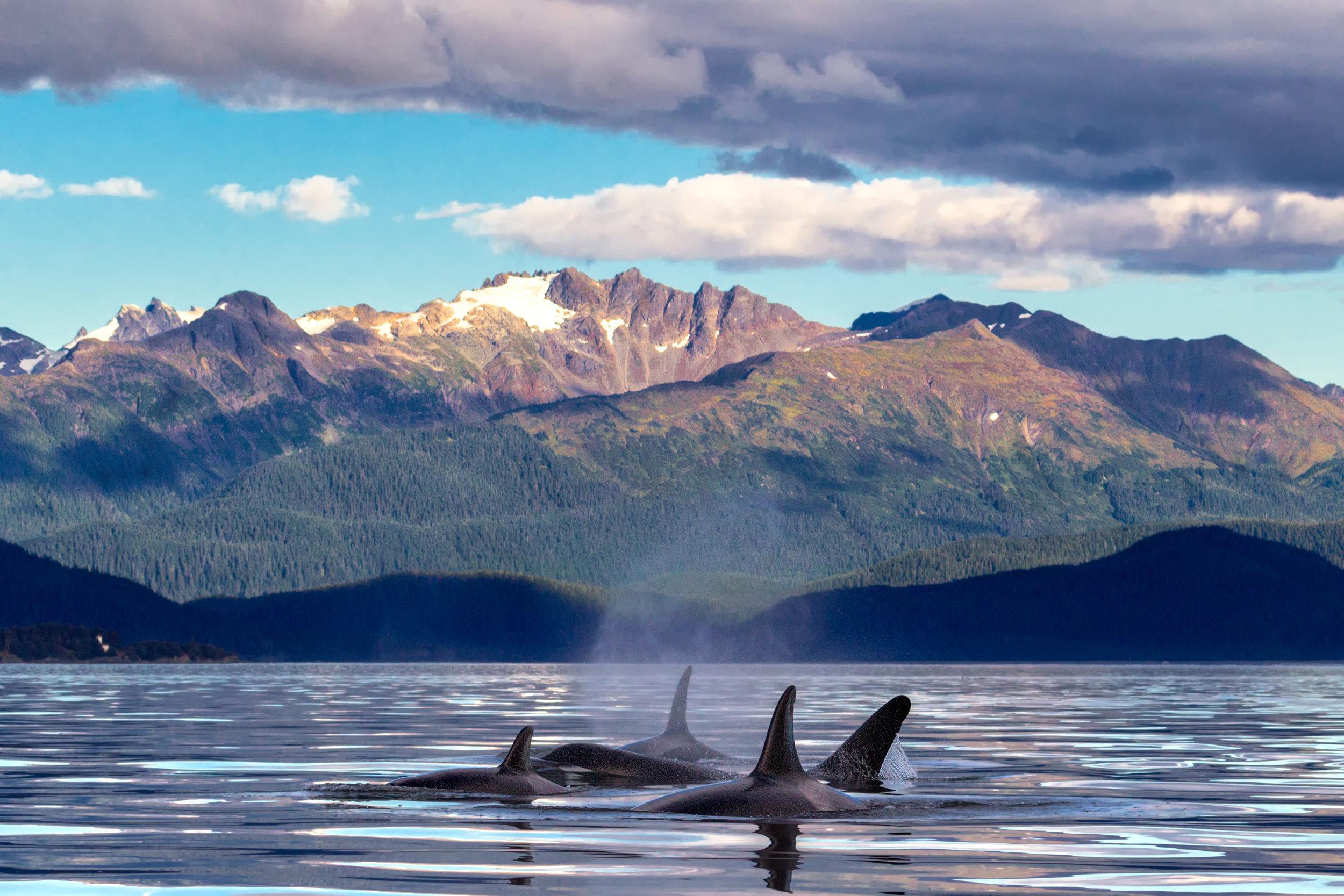 Orca-Mountain-Sunset.jpg