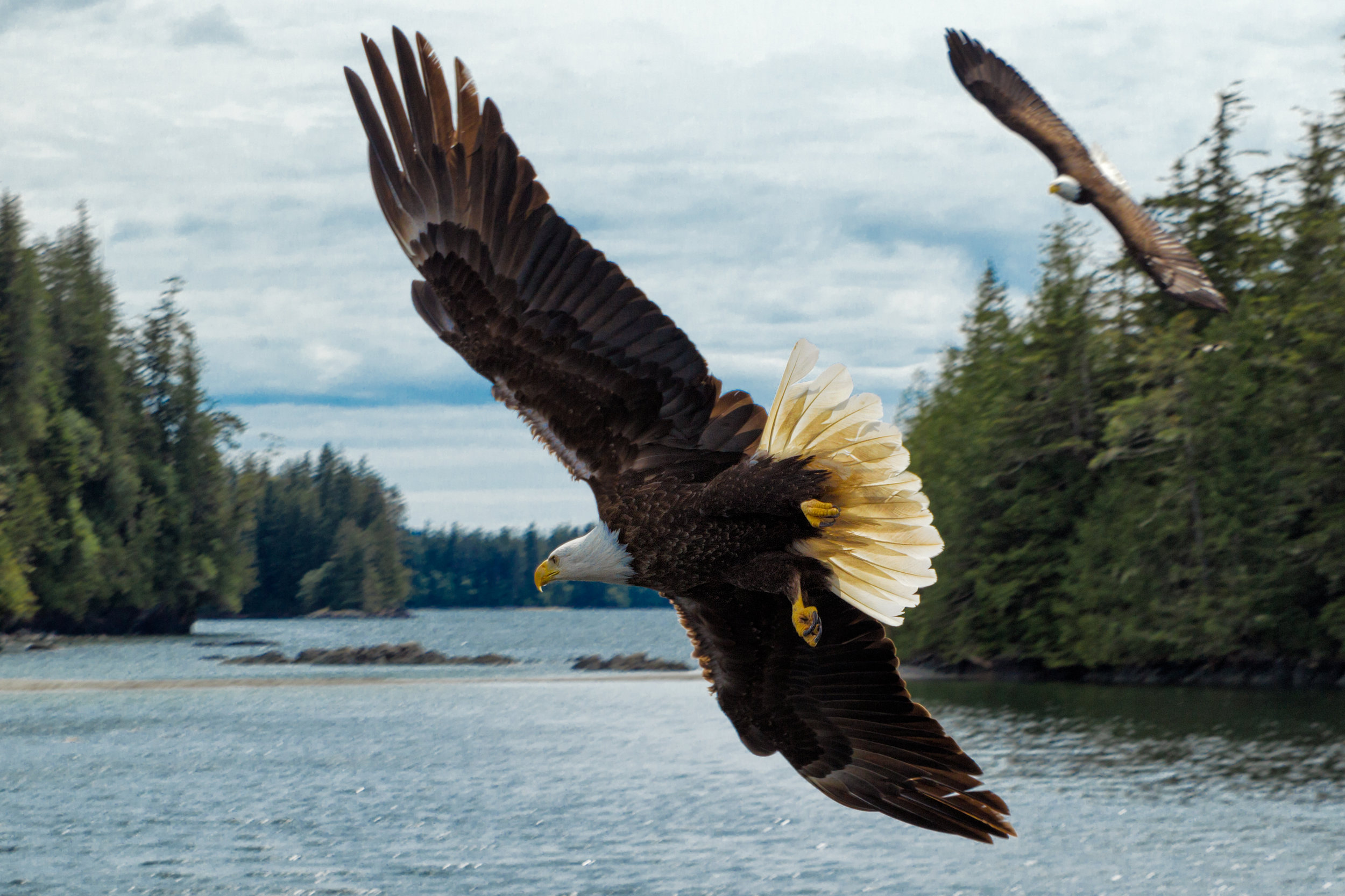 Bald-Eagle-Water.jpg