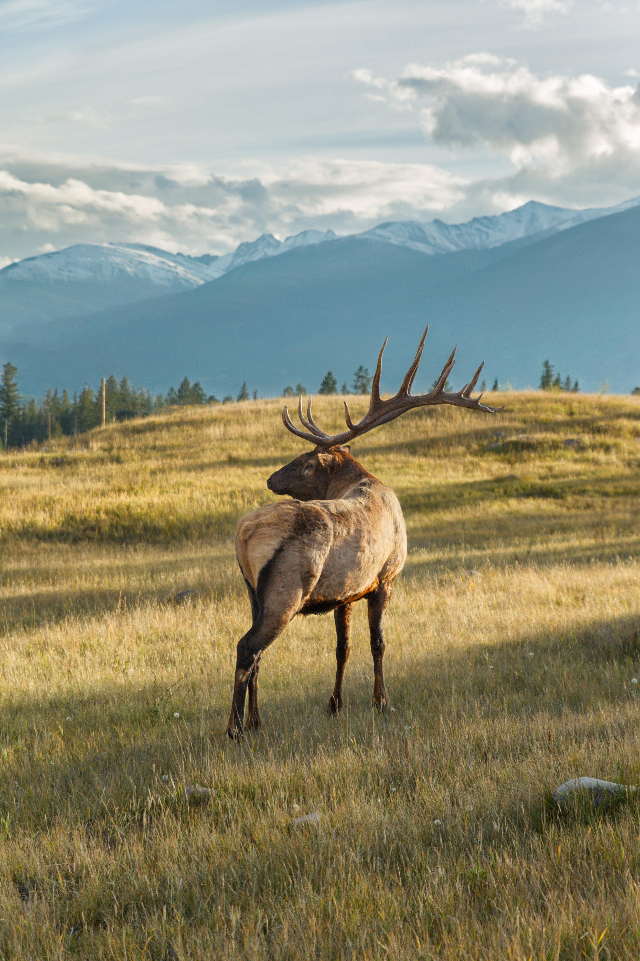 16-Point-Elk-Mountains.jpg