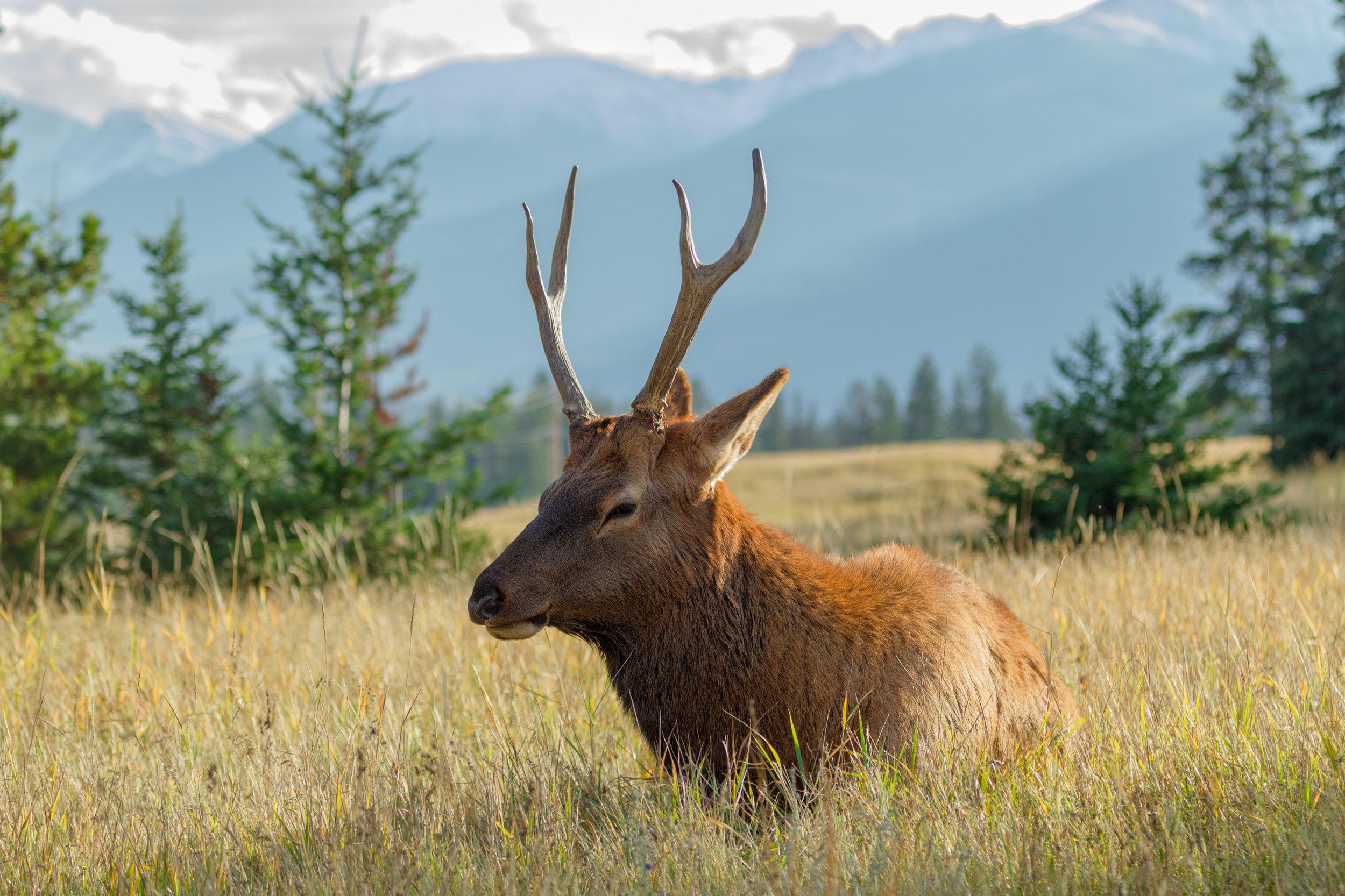Elk-Sitting-Mountain.jpg
