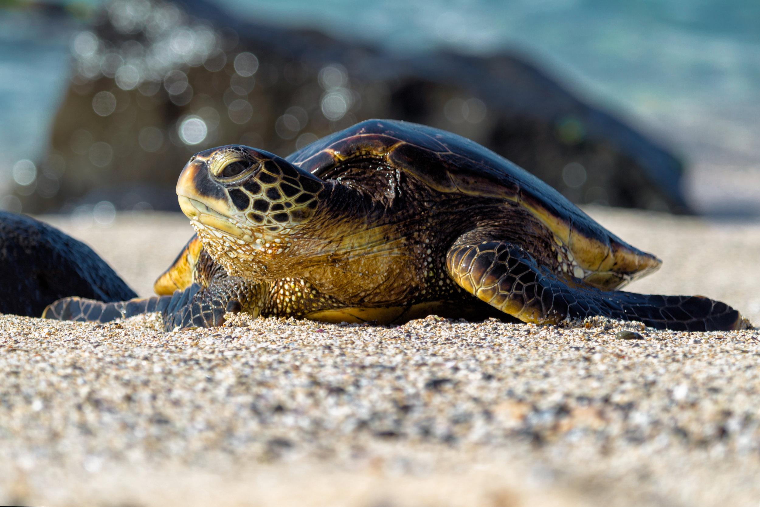 Baby-Turtle-Headup.jpg