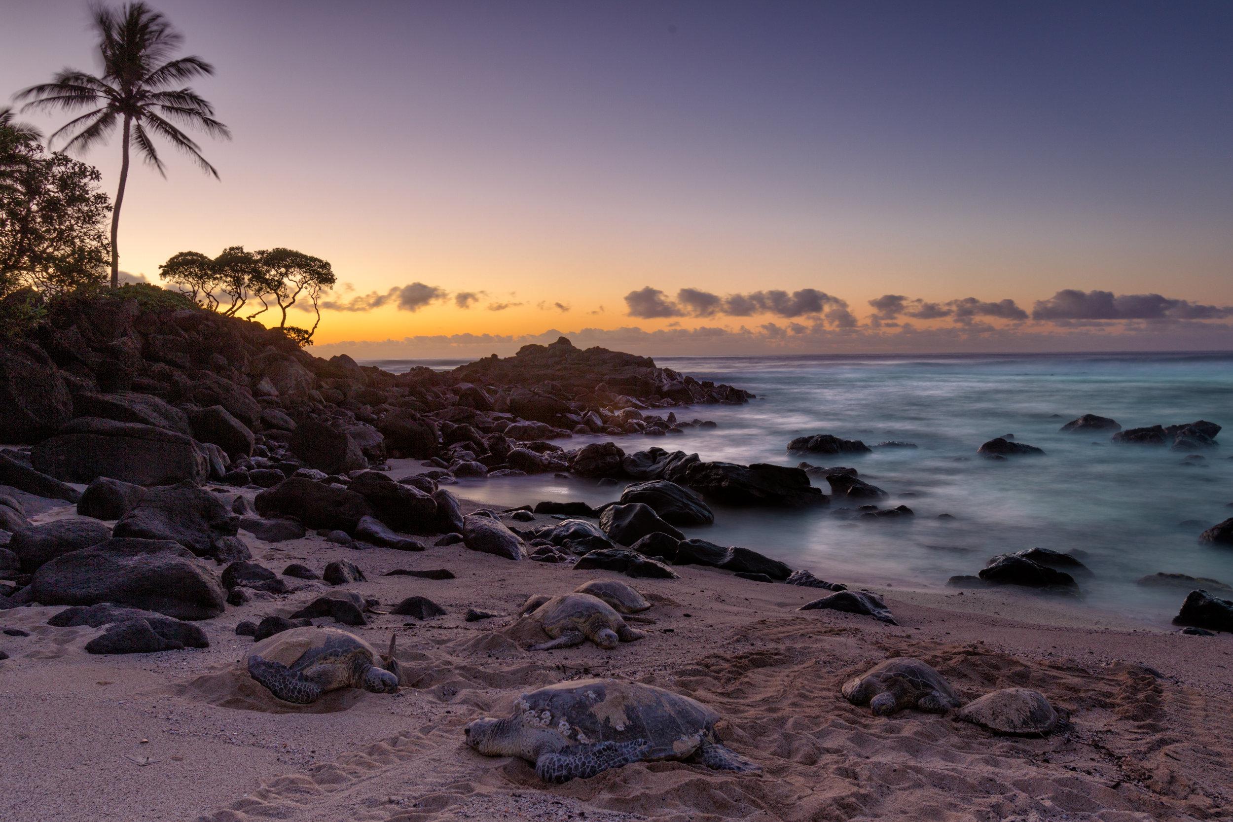 Palm-Tree-Turtle-Sunset.jpg