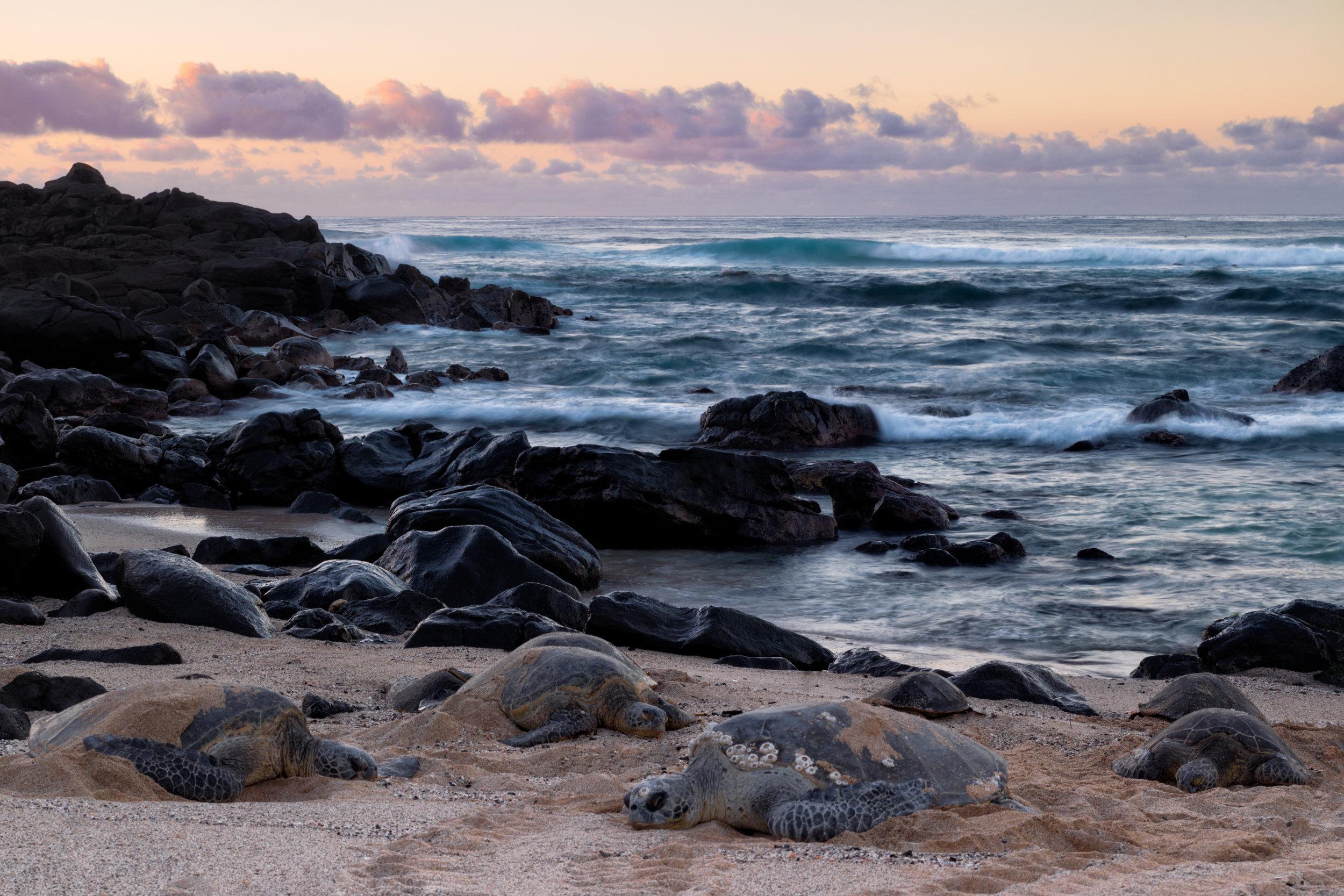 Seven-Turtle-Sunset.jpg