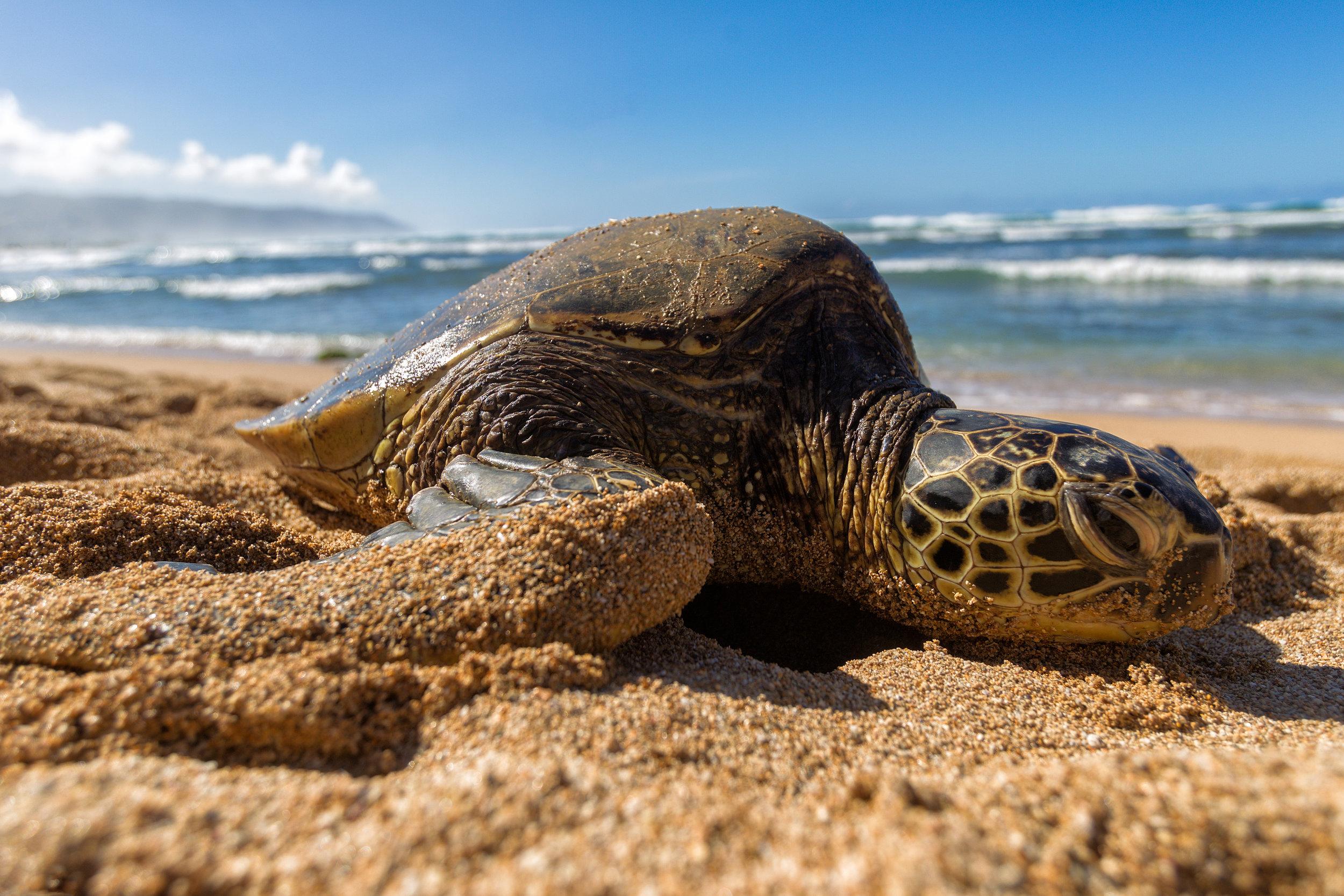 Sea-Turtle-Beached-Day.jpg