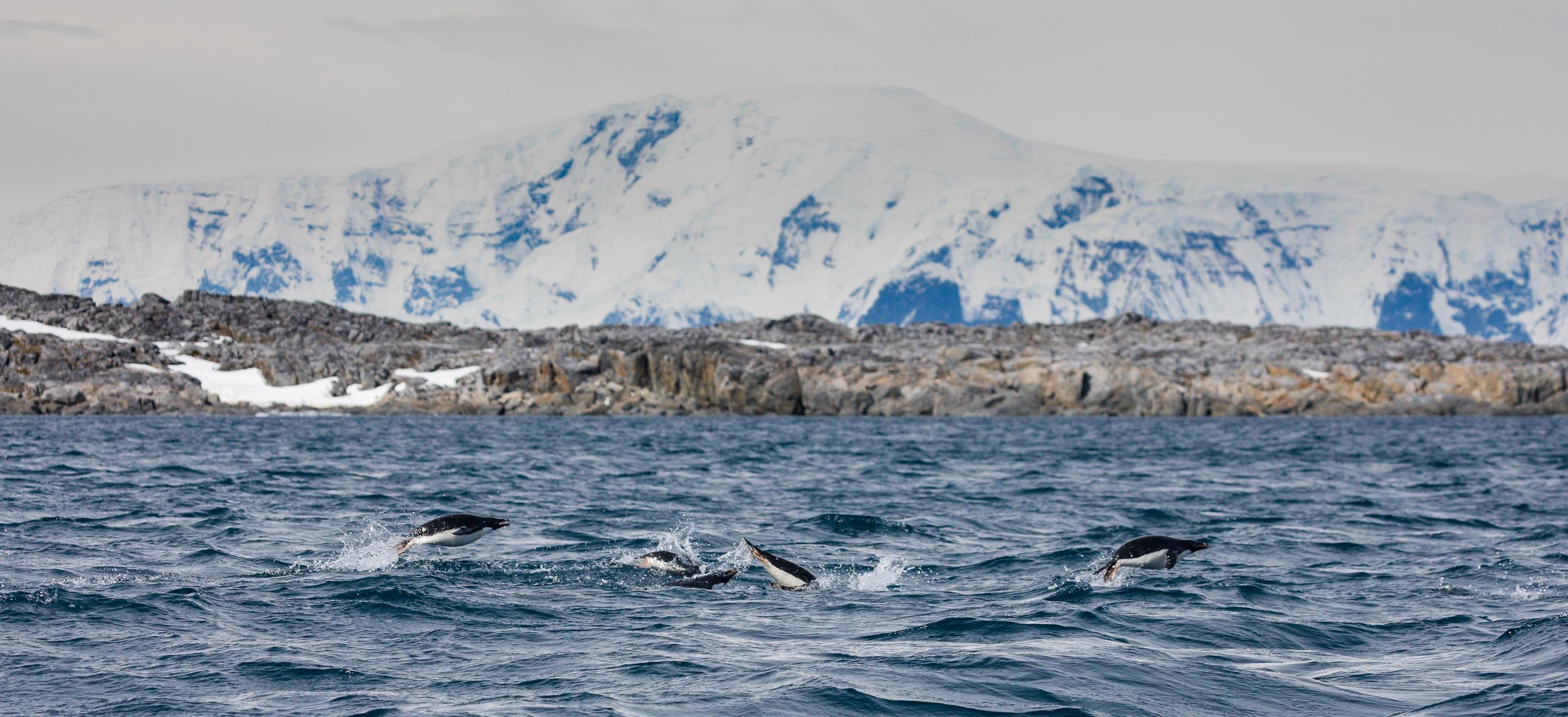 Torgerson Island, Antarctica-Brian Doyle Photo (2).jpg