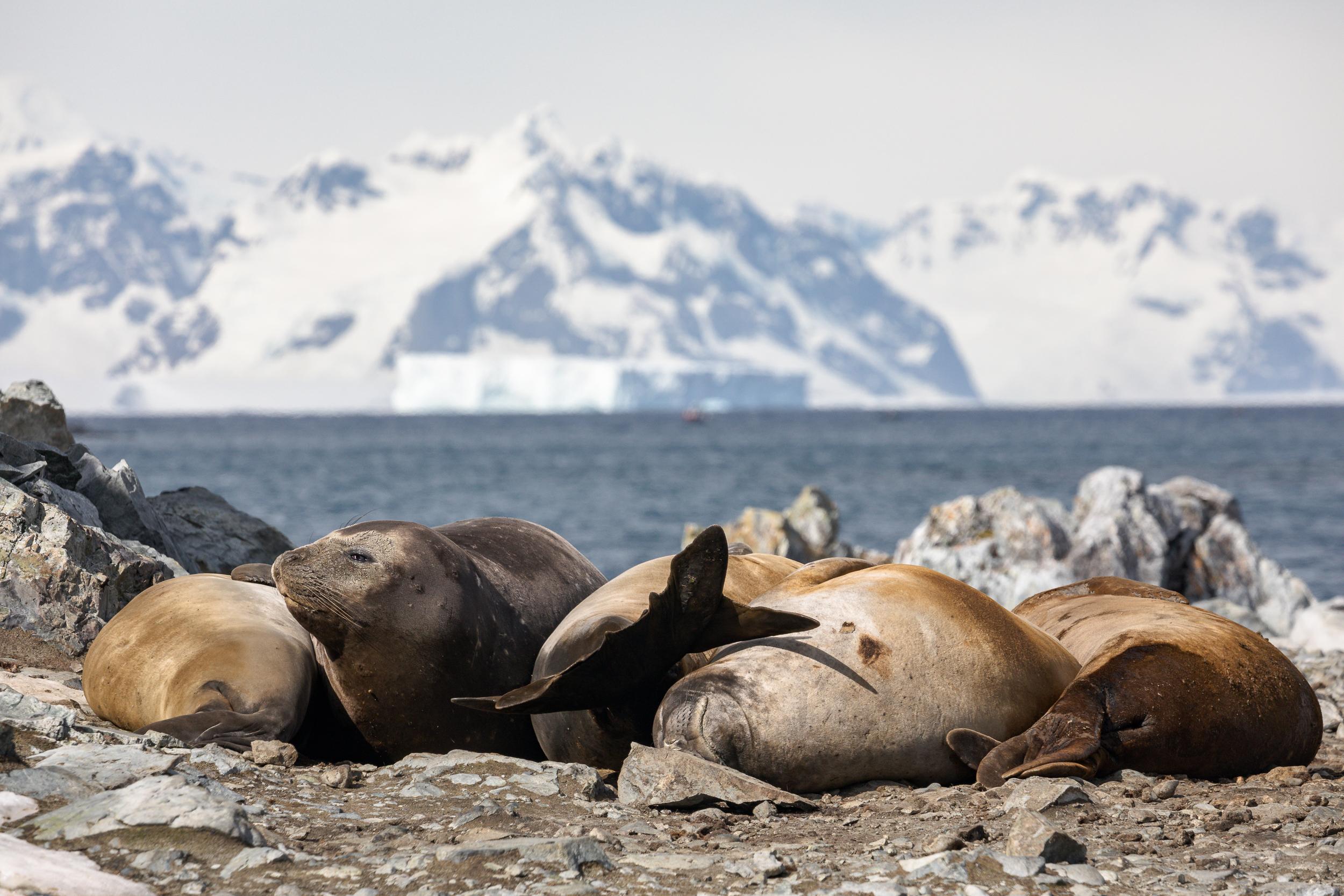 Torgerson Island, Antarctica-Brian Doyle Photo (1).jpg