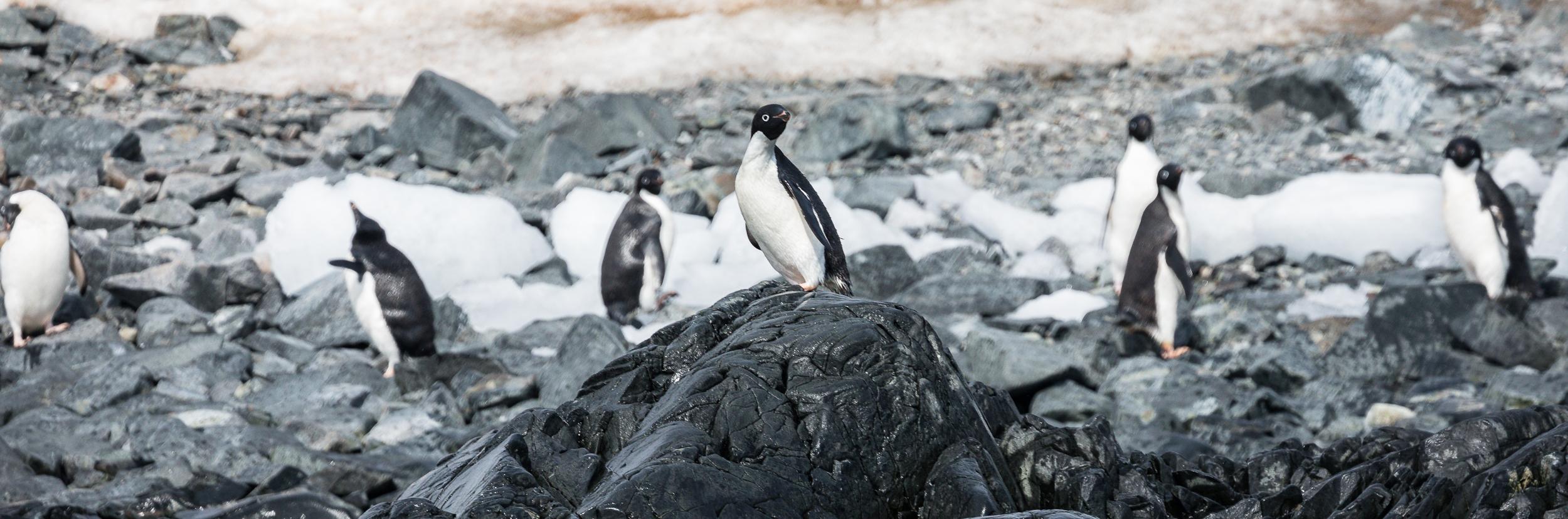 Torgerson Island, Antarctica-Brian Doyle Photo (4).jpg