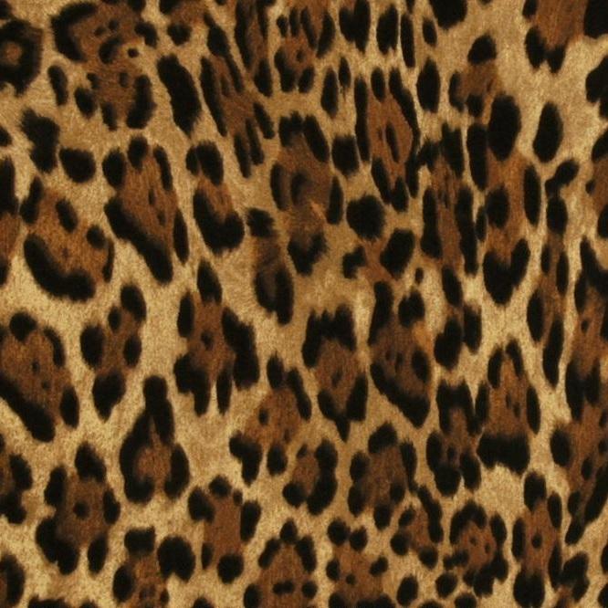 Wild Jaguar