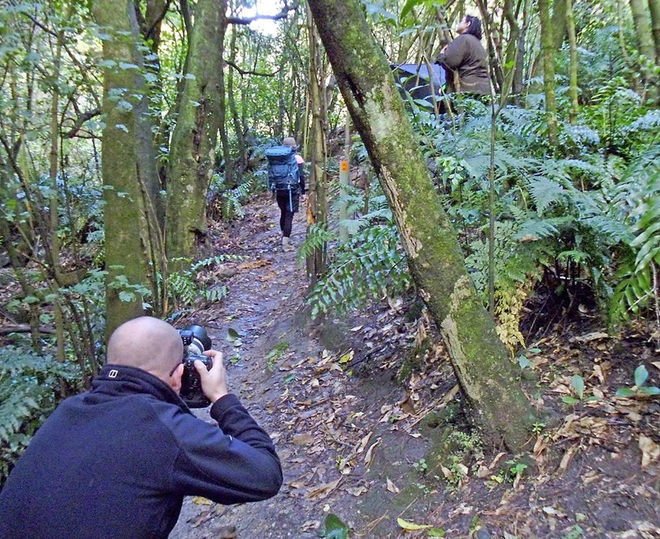 Te Mate Peak bush shoot