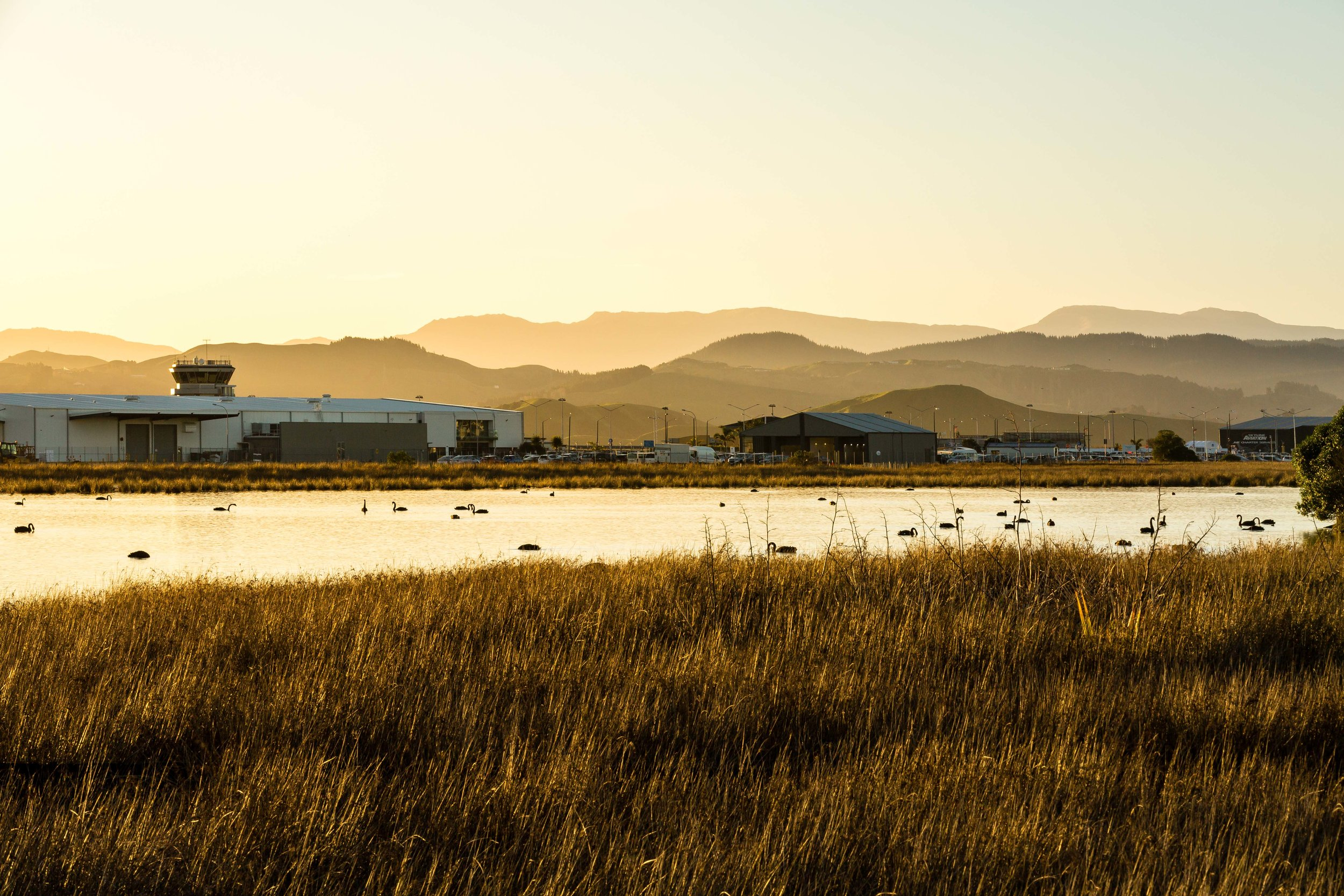 Hawke's Bay Airport as viewed from the wetland
