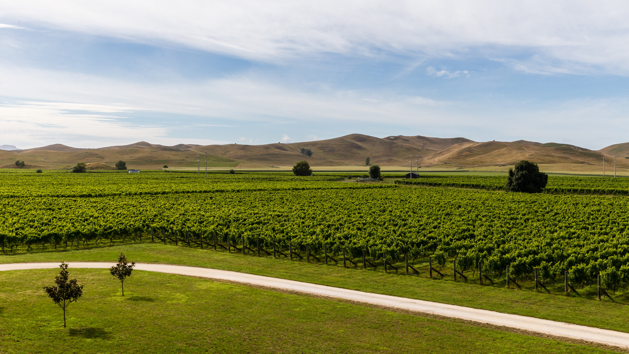 Love this classic Hawke's Bay view over the vines at Paritua