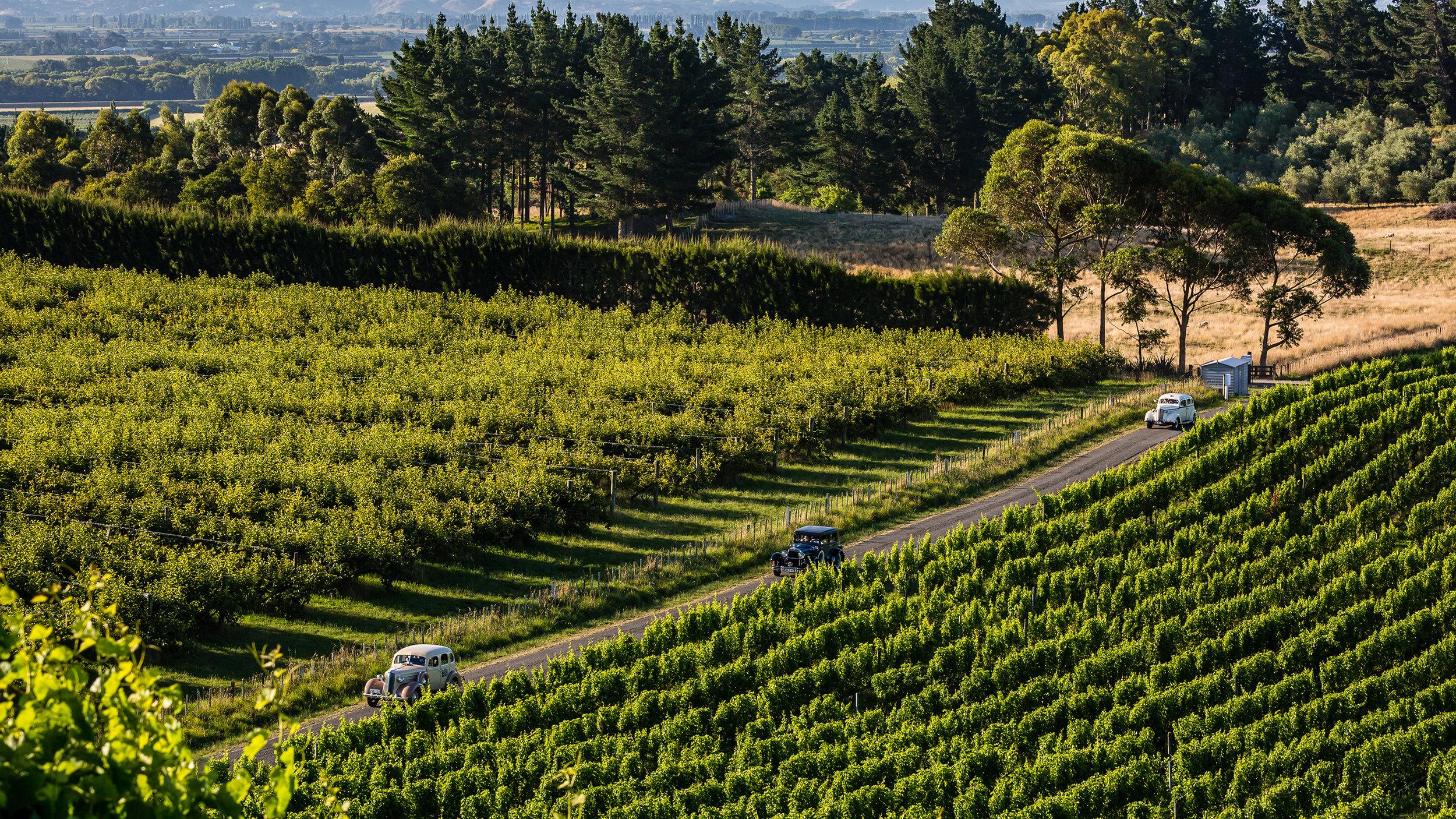 Classic cars driving through the Millar Road vineyard