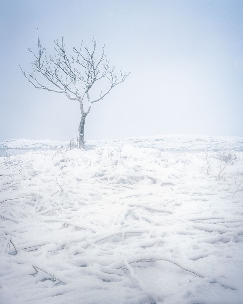 There was so much snow in Lofoten that I didn't know where to take my group, until one of them said 'are there any beautiful tree's we can photograph?'