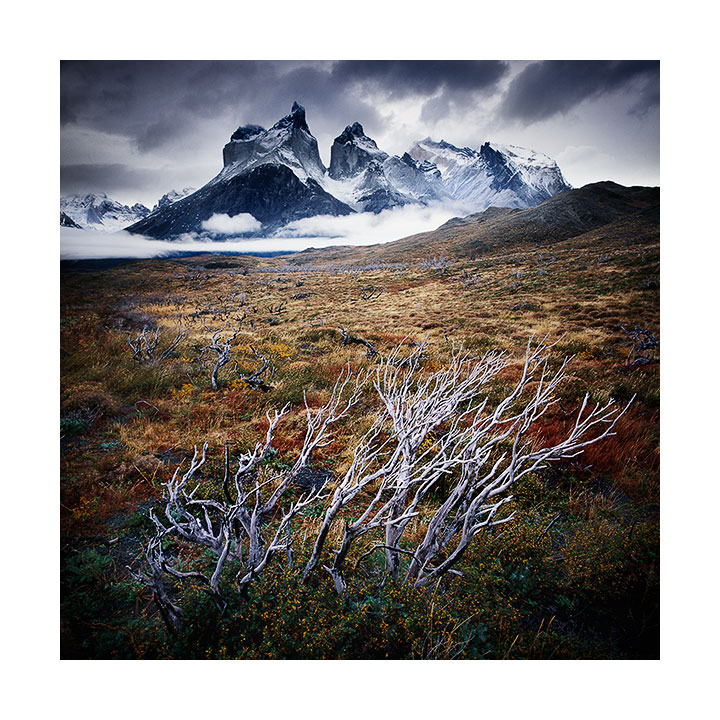 The Cuernos (Horns) of Paine & destroyed forest, Chilean Patagonia, 2015
