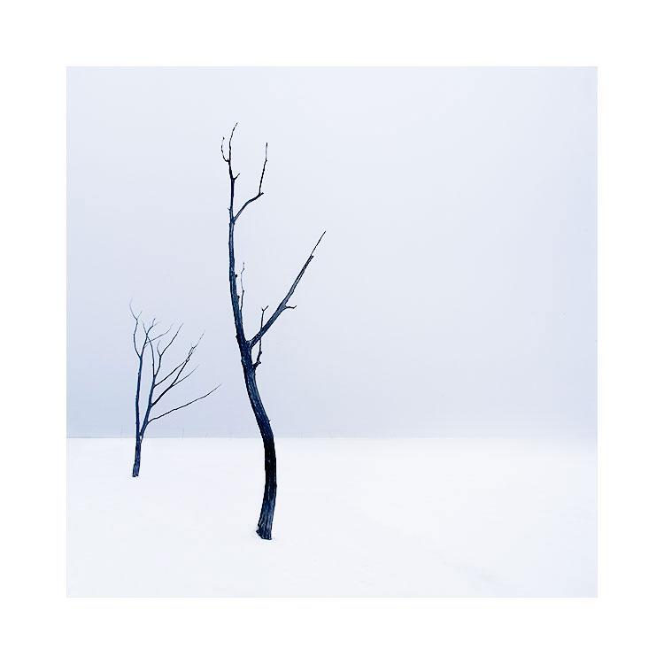 Not so lonely trees, Hokkaido, Japan. Image © Bruce Percy 2017